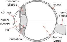 esquema-retina-desgarros